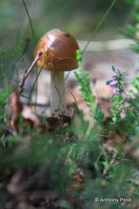 13ème salon des champignons et des lichens à Avon