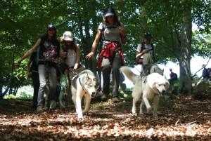 Chiens de traineaux en forêt de Fontainebleau