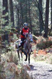 Concours internationald'endurance de Fontainebleau