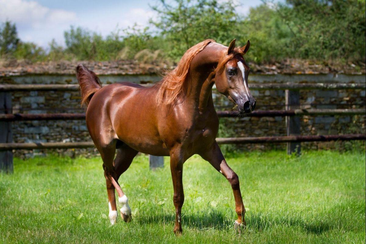La passion des chevaux. Le Pays de Fontainebleau a toujours eu une profonde passion…