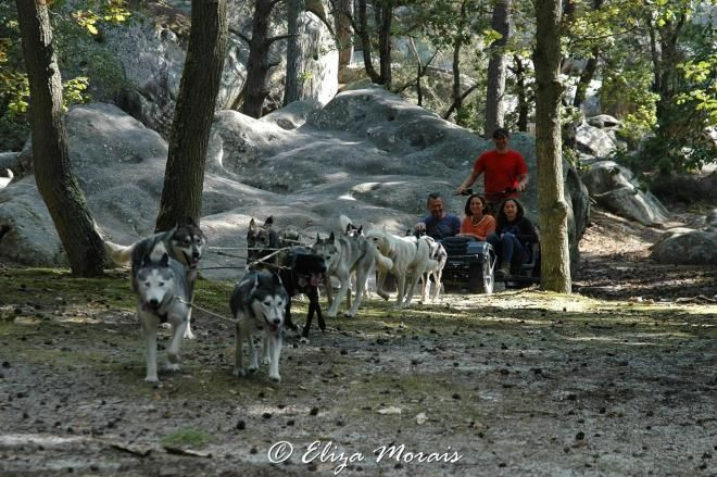 Bons cadeaux Noël: un baptême en chiens de traineau en forêt de Fontainebleau. Une…