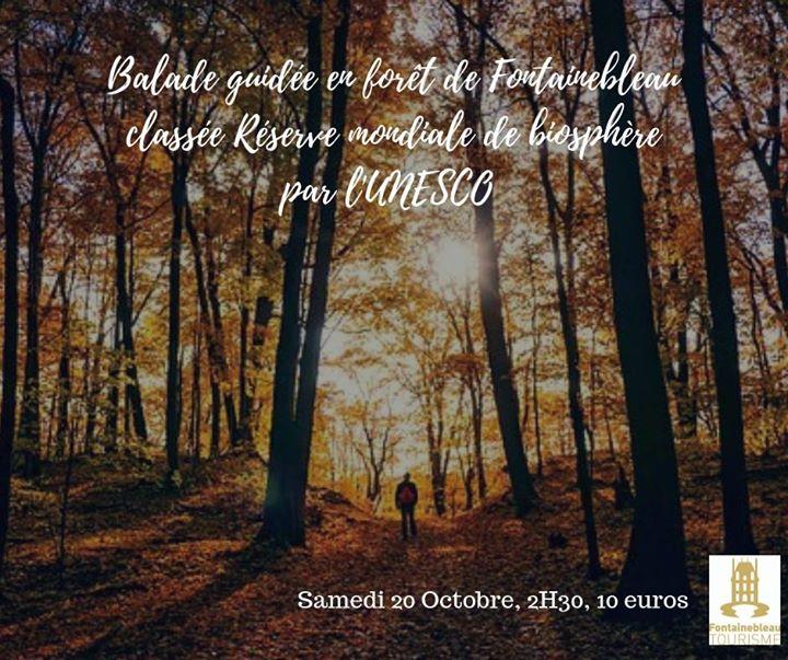 ️ Balade guidée en forêt de Fontainebleau, le samedi 20 Octobre. Apprenez à apprécier…