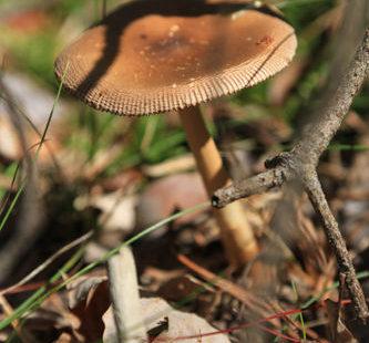 Cueillette en forêt de Fontainebleau. Revenir à l'essentiel et s'adonner à une petite chasse…