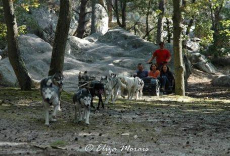 La forêt de Fontainebleau et ses multiples activités de plein air! Aujourd'hui, les chiens…