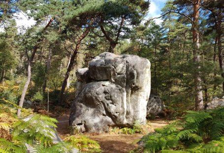 Balade rythmée par les paysages variés de la forêt de Fontainebleau pour le plaisir…