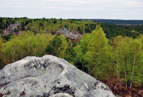 Quelques jolies photos de la forêt de Fontainebleau Dites-nous en commentaire quel est votre…