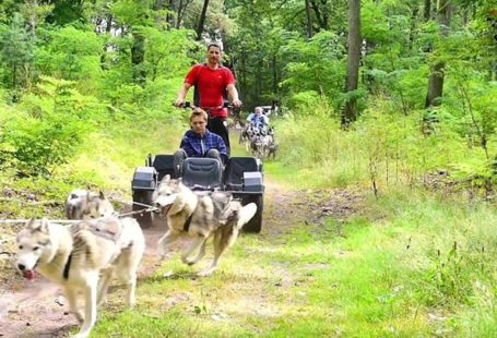 Le matin, en forêt de Fontainebleau, découvrez les chiens de traîneaux comme vous en…