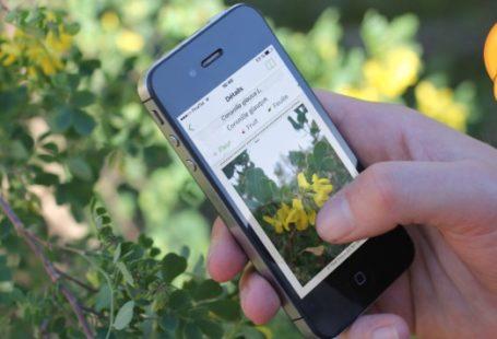 A découvrir cette application pour apprendre, tout en se baladant en forêt de Fontainebleau!…