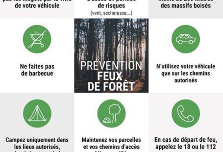 Un petit rappel de l'Office national des forêts : la végétation (landes, tourbes), la…
