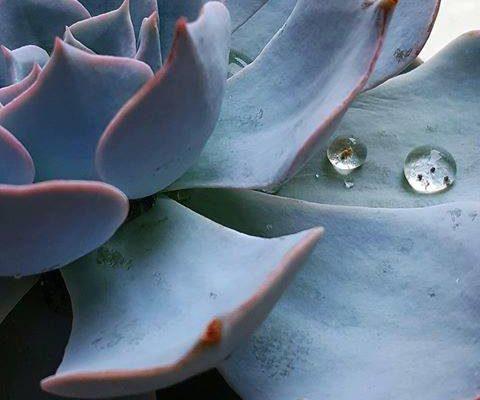 Une Pluie de Photos H2O. Découvrez la nouvelle exposition poétique de Stéphanie Foucher et…