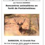 Exposition Photos Animaux en Forêt de Fontainebleau, Barbizon. Il faut une très grande patience…