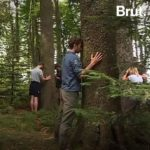 Fontainebleau Tourisme shared Brut's video