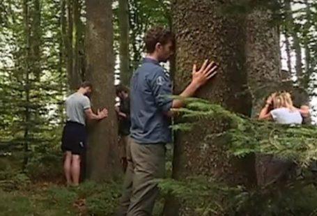 Fontainebleau Tourisme shared Brut's video