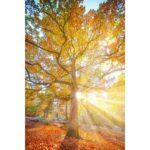 ️De la lumière, et la beauté de la forêt de Fontainebleau, en ce «Blue…