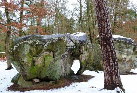 Fontainebleau Tourisme shared Une Photo par Jour en Forêt de Fontainebleau's post