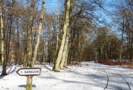 ️Barbizon, la forêt sous la neige. Barbizon, éternel lieu d'inspiration des artistes, révèle de…
