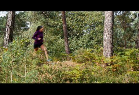 Une belle semaine pour organiser un week-end d'été en forêt de Fontainebleau? . Une…