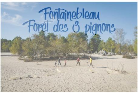 Découvrez la forêt des Trois Pignons dans l'œil d' Anne Landois-Favret – Auteur Photographe…