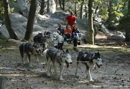 Découvrez une activité accessible à tous : la randonnée avec les chiens de traîneaux…