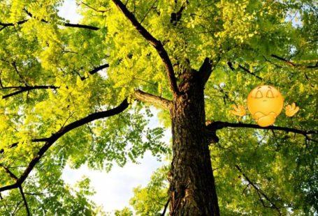 [Destination Ressourcement] Célébrons les bienfaits de la forêt, pour un VRAI ressourcement! La #forêt…