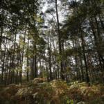 Il est conseillé de marcher deux heures par mois en forêt ! Avez-vous fait…
