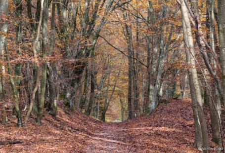 [Idée Week-end] Petit témoignage sur un #week-end réussi en Pays de Fontainebleau! Pour se…