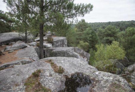 Fontainebleau Tourisme shared La République de Seine et Marne's post