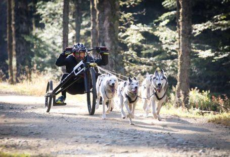 Fontainebleau Tourisme shared Evasion Canine – Activités chiens de traîneau's post
