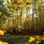 Fontainebleau Tourisme shared Ma Forêt de Fontainebleau's post