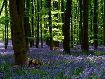 Fontainebleau Visite en forêt avec un guide forestier Venez découvrir la forêt de Fontainebleau…