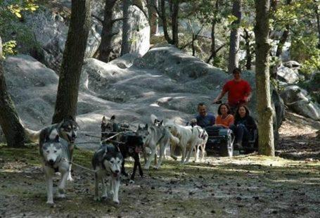 Forêt de fontainebleau avec des chiens de traineaux Août 2017 Découvrez les chiens de…