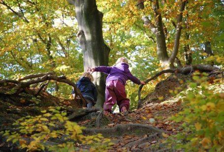 Réservez des aujourd'hui, il reste quelques places! Fontainebleau : visite en forêt avec un…