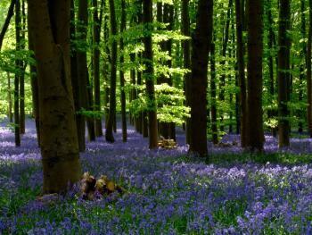 Fontainebleau Tourisme / 77 300 Balade contée en forêt de Fontainebleau La Forêt qui…