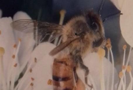 L'abeille, témoin de notre environnement. Jusqu'au 30 Avril, Espace Renoir, Bourron-Marlotte. Exposition:»les abeilles et…