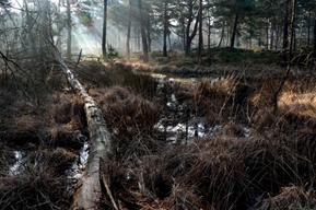 Balades à la découverte des mares de la forêt – 5Km Le Samedi 6…