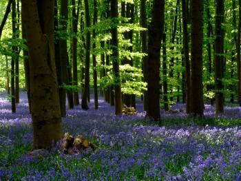 Il reste quelques places pour découvrir les balades contées en forêt de Fontainebleau. Sortie:…