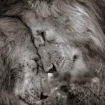 Pour les passionnés de la photographie nature