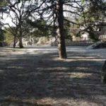 En direct de la forêt de Fontainebleau. Une