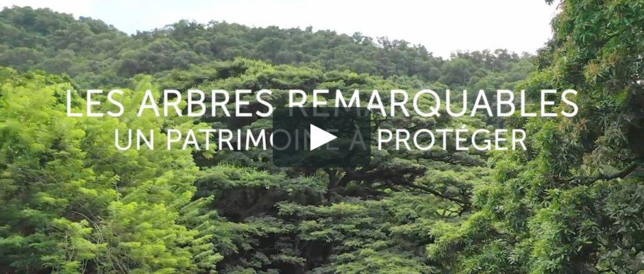 À la découverte des arbres remarquables. Une vidéo très agréable à regarder, et de…