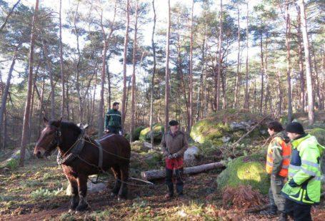 La forêt de Fontainebleau se refait une beauté… Office national des forêts Ville de…