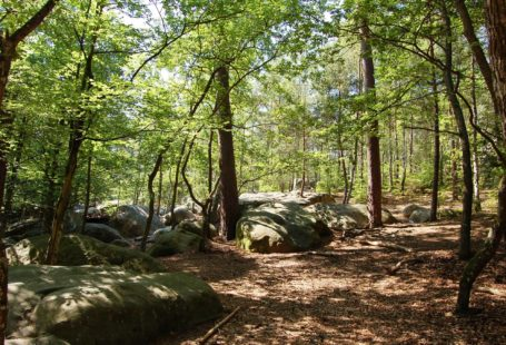 Ce samedi, balade guidée en forêt de Fontainebleau avec notre guide Mr. Richy. Préparez-vous…