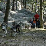Une belle idée d'activités en forêt de Fontainebleau ! Infos et réservations: Office de…