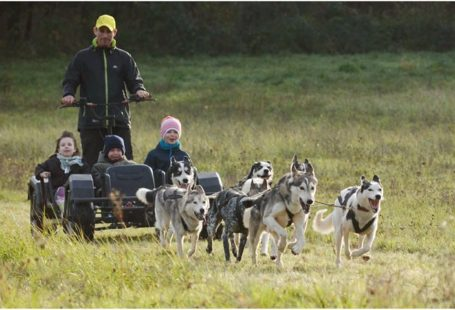 Les activités » #chiens de #traîneau se terminent à Fontainebleau pour la mais seront…