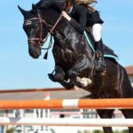 Destination Equestre d'Exception. C'est souvent à l'enfance que la passion pour les chevaux et…