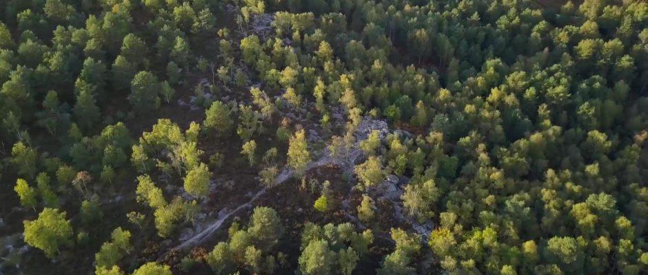Ce soir, une plongée en forêt de Fontainebleau, à la rencontre de son histoire…