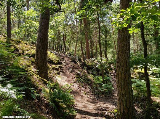 Bon week-end en forêt de Fontainebleau