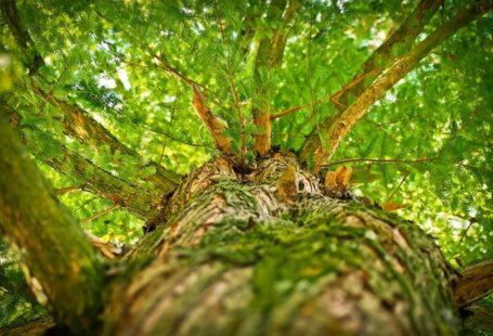 La nature vous offre sa fraîcheur en forêt de Fontainebleau, ce week-end. Avec 22…