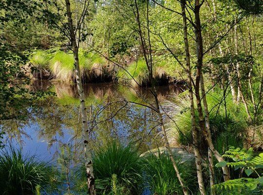 La forêt de Fontainebleau offre une extraordinaire variété de paysages. Connue pour ses chaos…