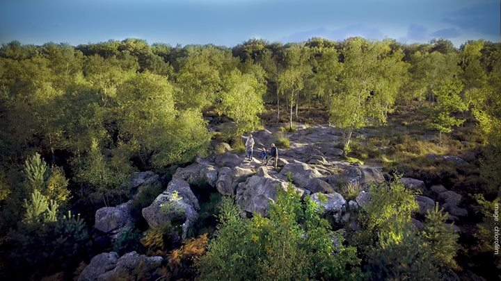Bons cadeaux Noël: balade avec un guide en forêt de Fontainebleau. Dans le cadre…