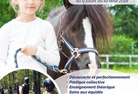 Fontainebleau Tourisme shared Ecuries De La Faisanderie's post